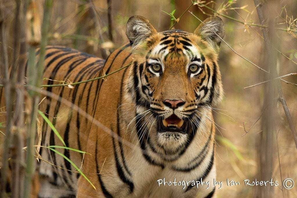 Mona photographed by Ian Roberts whilst on a NaturesLens Photography Holiday in India