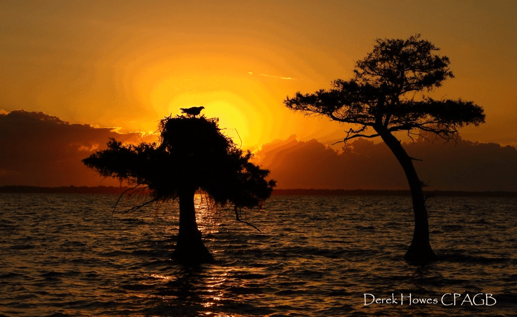 Sunrise over the lake, the ospreys were already awake & the males had departed for the first fishing tour of the day - photographed on the NaturesLens Osprey Photography Holiday conducted in Florida during April 2016