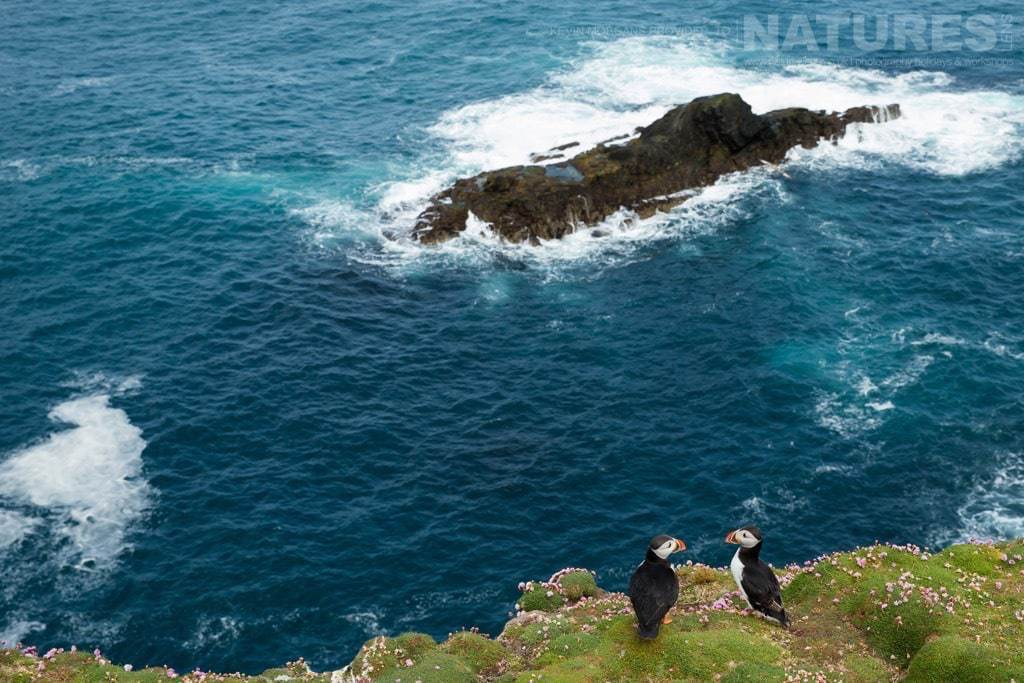 A pair of Shetland's puffins against the dramatic coastline of Fair Isle - photographed on the NaturesLens Puffins of Fair Isle Photographic Holiday