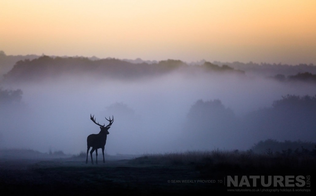 As the sun rises, a stag is silhouetted against the morning mist - image is typical of that which may be captured on the NaturesLens Red Deer in Rut Photography Workshop