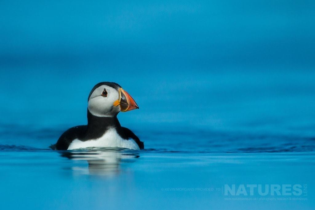 Want some Top Tips for Puffin Photography? 1