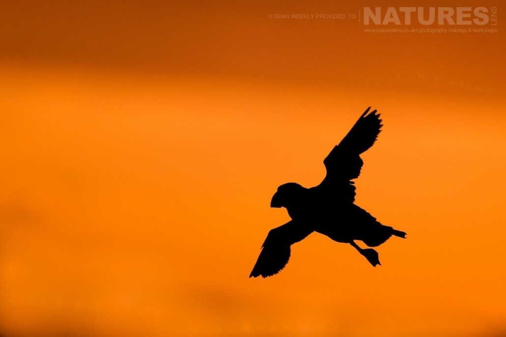 an example of the type of creative Puffin images that may be captured at the end of the day on Skomer Island