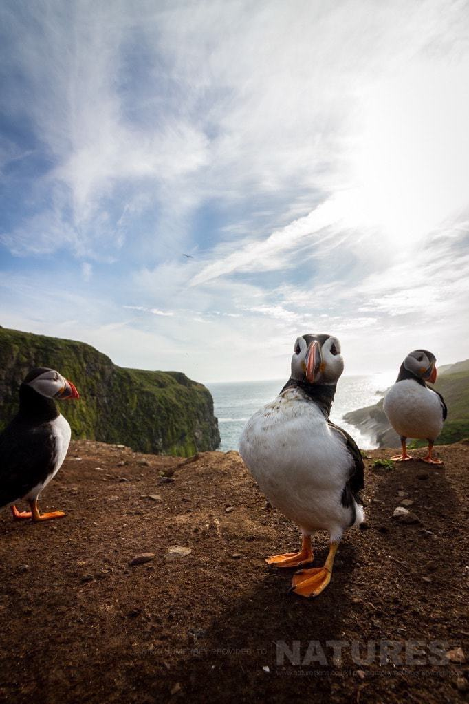 Puffins in wide-angle at The Wick - photographed during the NaturesLens Skomer Puffins Photography Holiday