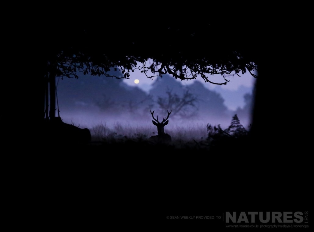 Sean's award winning image of a deer at dawn, an example of the creative red deer & stag imagery achieved by NaturesLens Red Deer in Rut Photography Workshop Leader Sean Weekly