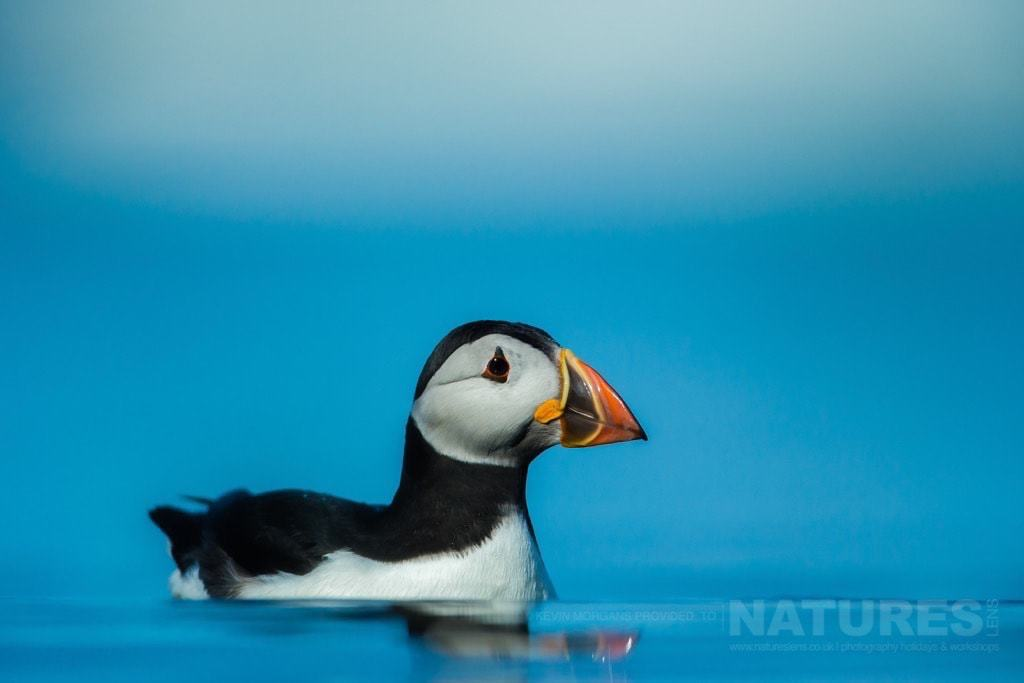 Serenely floating on the sea, an Atlantic Puffin photographed in one of the bays of Skomer Island - join Kevin in 2017 on the July Puffins of Skomer Photography Holiday