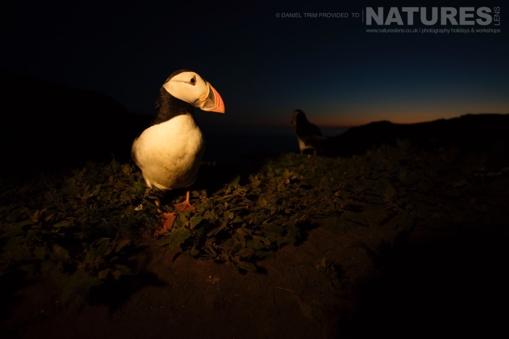 After the sun has set the puffins remain active & distinctive images may be captured - photographed whilst on the NaturesLens Puffins of Skomer Photography Holiday