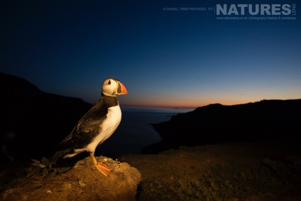 Even when the sun has set the puffins still pose for images - captured whilst on the NaturesLens Puffins of Skomer Photography Holiday