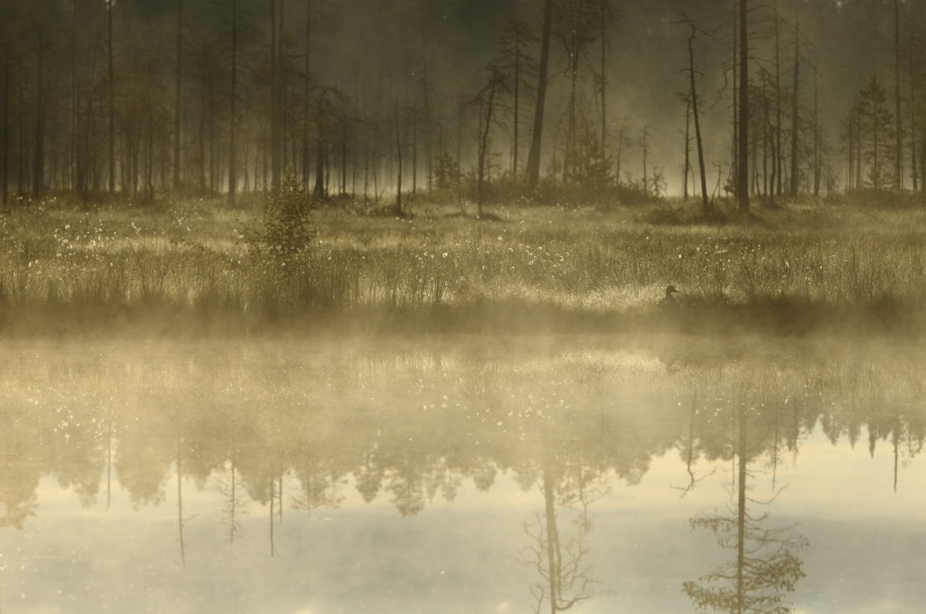 An early morning misty image - typical of the type of image that may be captured photographed at the location used for the NaturesLens Brown Bears of Finland Photography Holiday