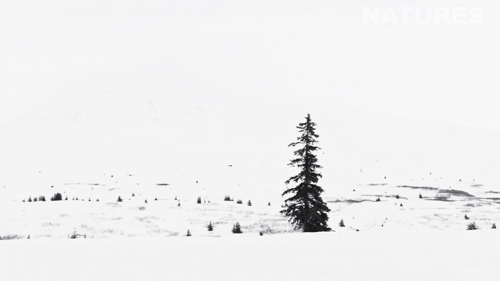 A Stark And Barren Landscape, Typical Of Those Found In Both The Yukon And The Chilkat Valley Photographed On The NaturesLens Bald Eagles Of Alaska Photgraphy Holiday