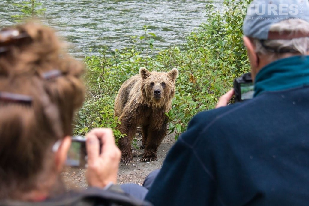 All our photography opportunities are supervised & conducted in safe manner, enabling you to gain a stunning portfolio of bear images from the NaturesLens Grizzly Bears of British Columbia Photography Holiday