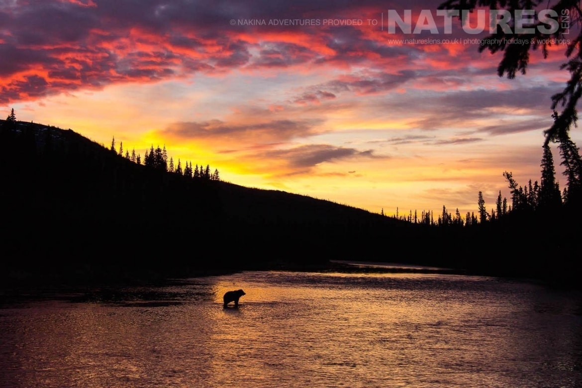 an atmospheric image of a bear in the landscape of fishing branch river typical of the kind of image that may be captured on the natureslens ice bears of the yukon photographic holiday
