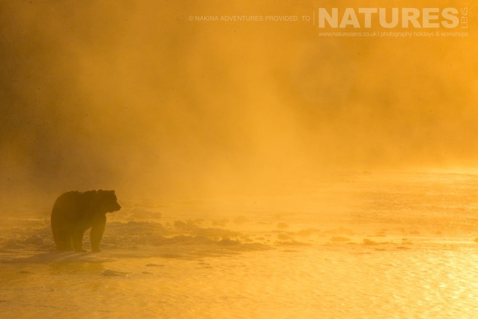 An Atmospheric Image Of Fishing Branch River With A Grizzly Bear Of The Yukon Typical Of The Kind Of Image That May Be Captured On The Ice Bears Of The Yukon Photographic Holiday