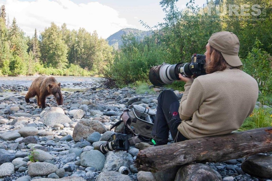 Just an example of the amazing Grizzly Bear photography opportunities that you will experience on the NaturesLens Grizzly Bears of British Columbia Photography Holiday