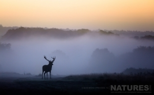A Red Deer Stag Amongst The Mist This Image Was Captured On A Previous NaturesLens Red Deer Photography Workshop