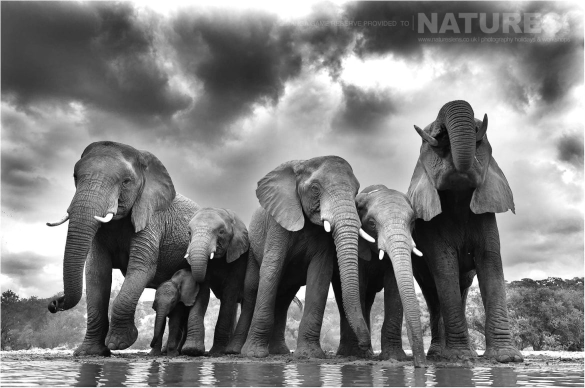 A low level image of a herd of elephant typical of those that may be captured at Zimanga Game Reserve during the NaturesLens African Wildlife of Zimanga Photography Holiday