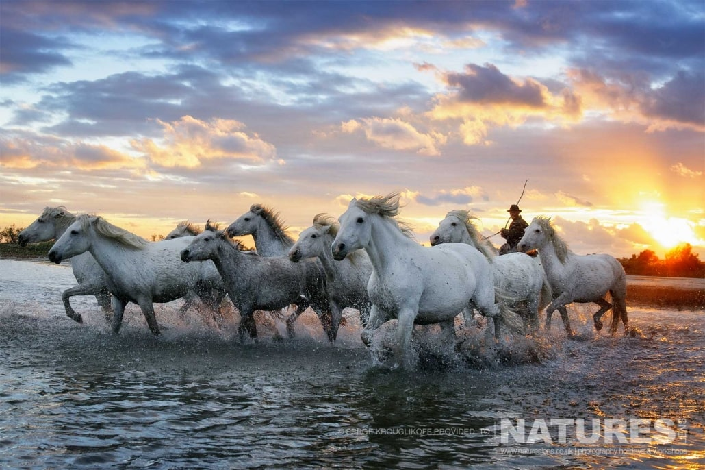 Image typical of those that may be captured on the NaturesLens White Horses of the Camargue Photography Holiday (3 of 13)