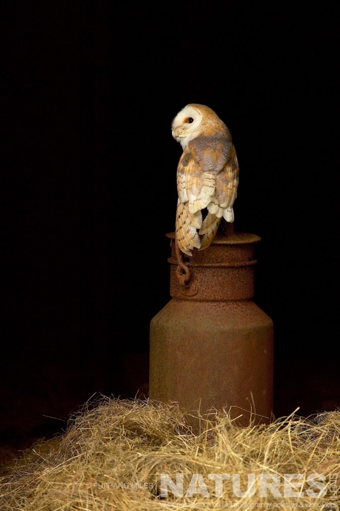 A Barn Owl on a vintage milk churn typical of the kind of images that may be captured on the NaturesLens Bird of Prey Workshop