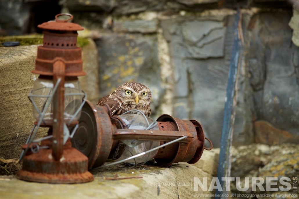 One of the Little Owl and some vintage storm lanterns typical of the kind of images that may be captured on the NaturesLens Bird of Prey Workshop