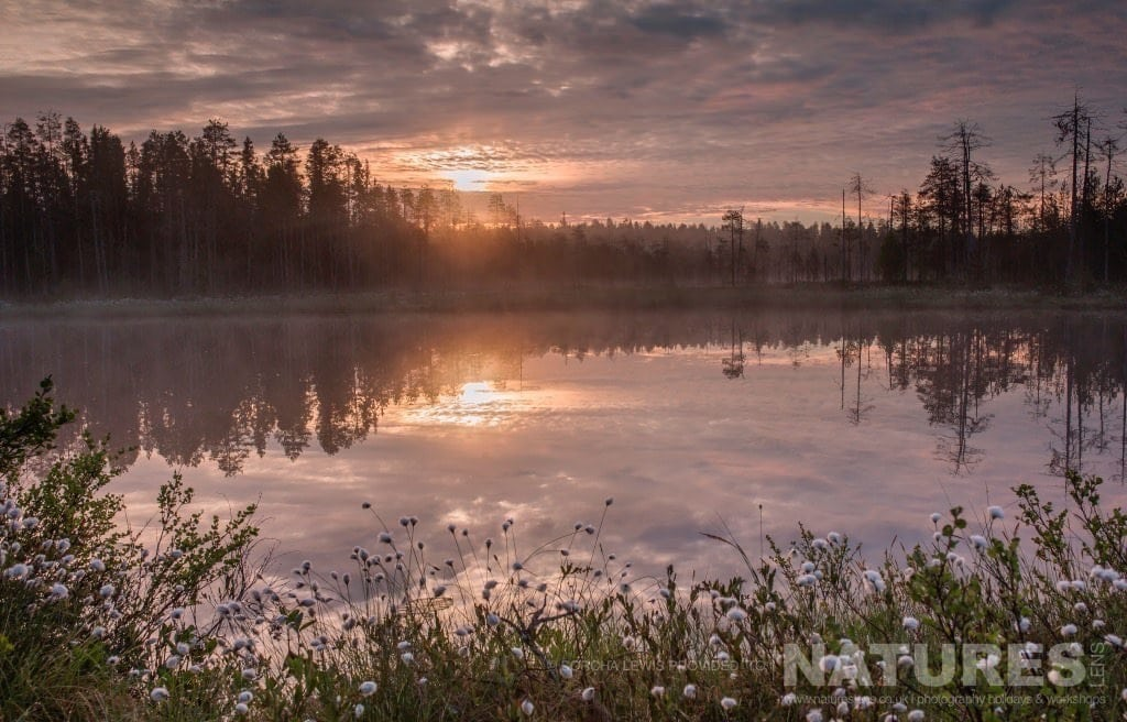 Sunrise and Sunset are so close to one another in the season of the midnight sun photographed during the NaturesLens Wild Brown Bears of Finland Photography Holidays