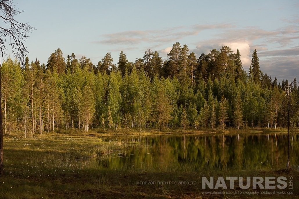 The taiga forest environment that the wild brown bears are found within photographed during the NaturesLens photography holiday to photograph the Wild Brown Bear