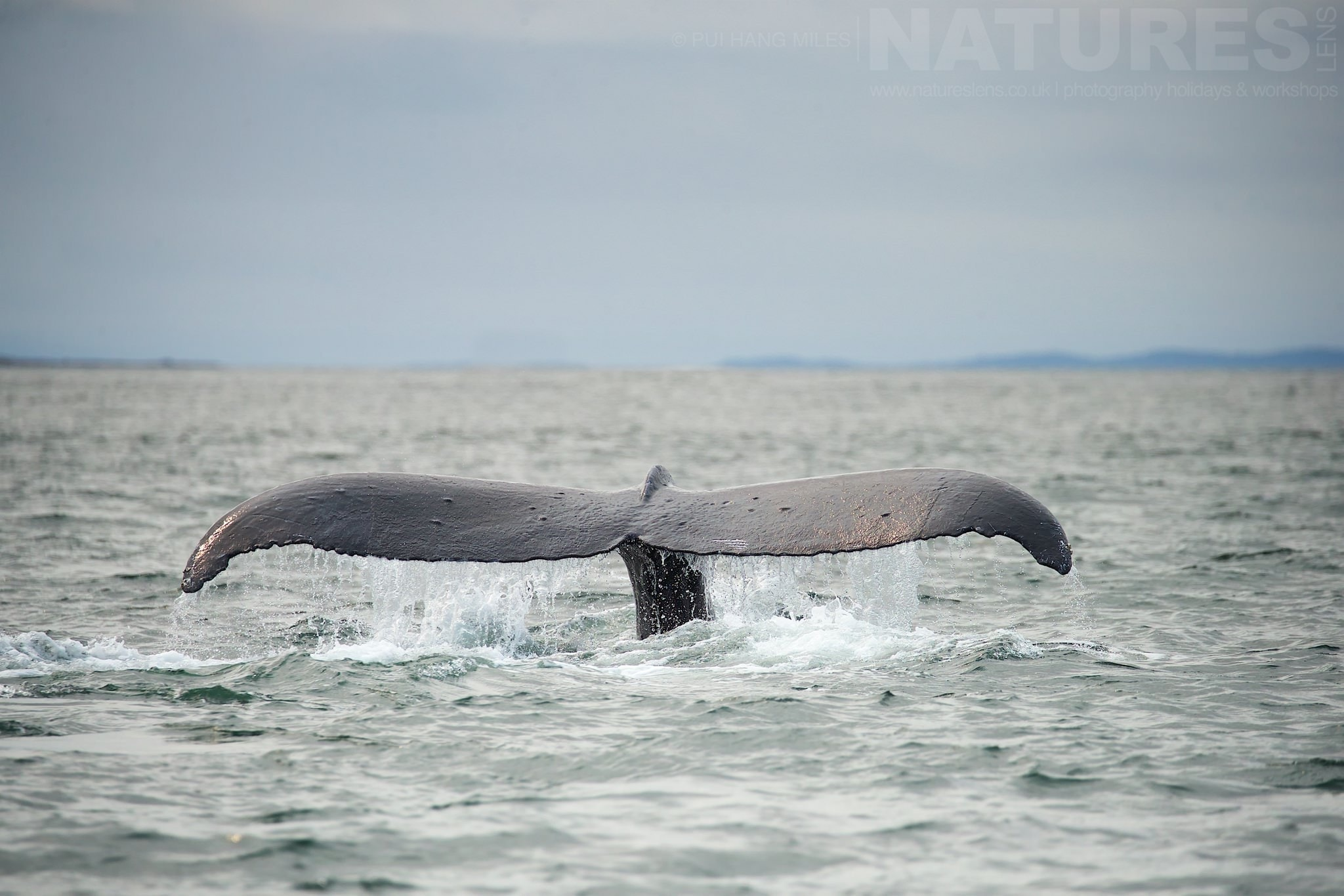 Humpback Whale Fluke  Photographed During The NaturesLens Alaskan Whales And Glaciers Photography Holiday