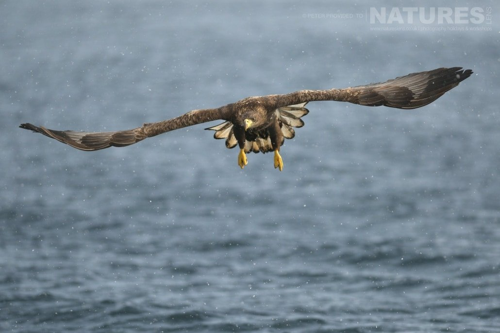 A White Tailed Sea Eagle flies over the pack ice laden seas outside Rausu this image was captured on the Island of Hokkaido during the NaturesLens Winter Wildlife of Japan Photography Holiday