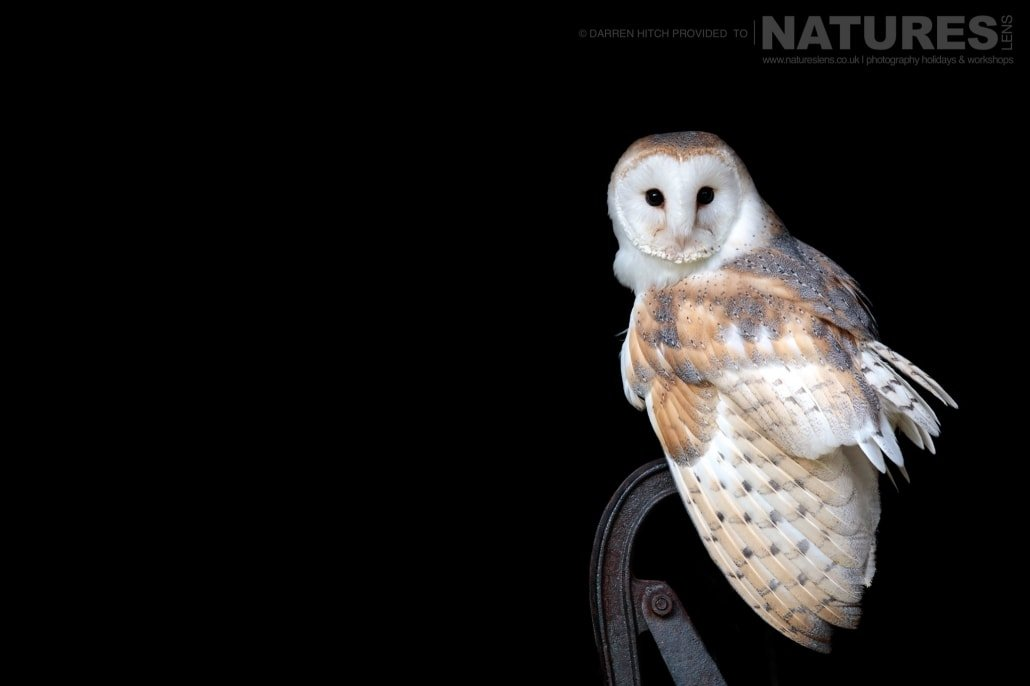A barn owl on a vintage water pump, photographed on the NaturesLens Autumn Birds of Prey Workshop