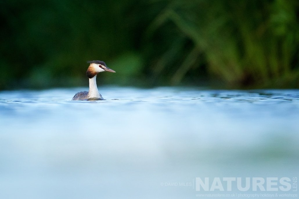 A grebe floats serenely on the waters in front of the lake hide typical of the type of image that may be captured during the NaturesLens Red footed Falcons & Steppe Birds of Hungary Photography Holiday