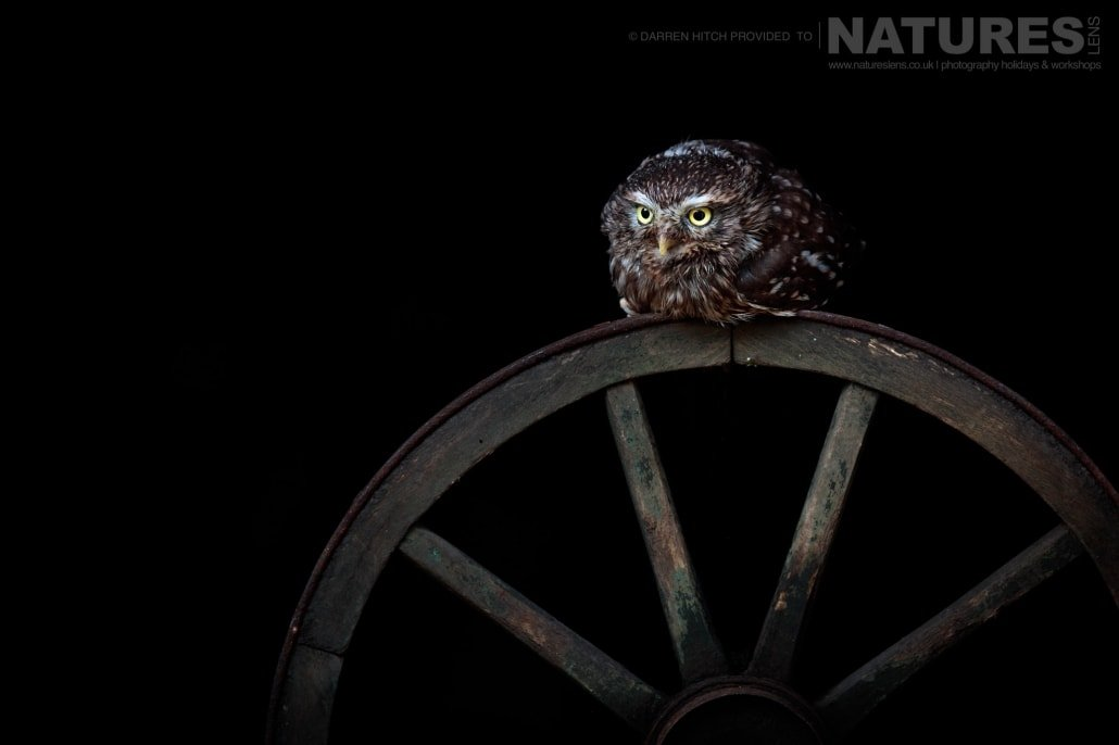 A little owl perched on a vintage wheel, photographed on the NaturesLens Autumn Birds of Prey Workshop