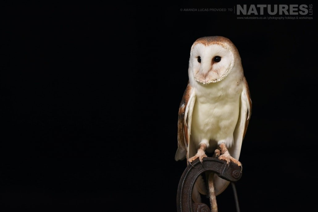 The wonderful barn owl, perched on a vintage water pump, photographed on the NaturesLens Autumn Birds of Prey Workshop