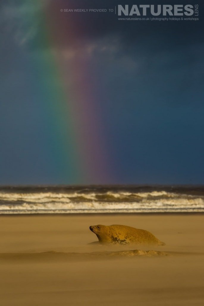 A seal with a Lincolnshire rainbow in the background photographed on the NaturesLens Seals of Lincolnshire Photography Holiday