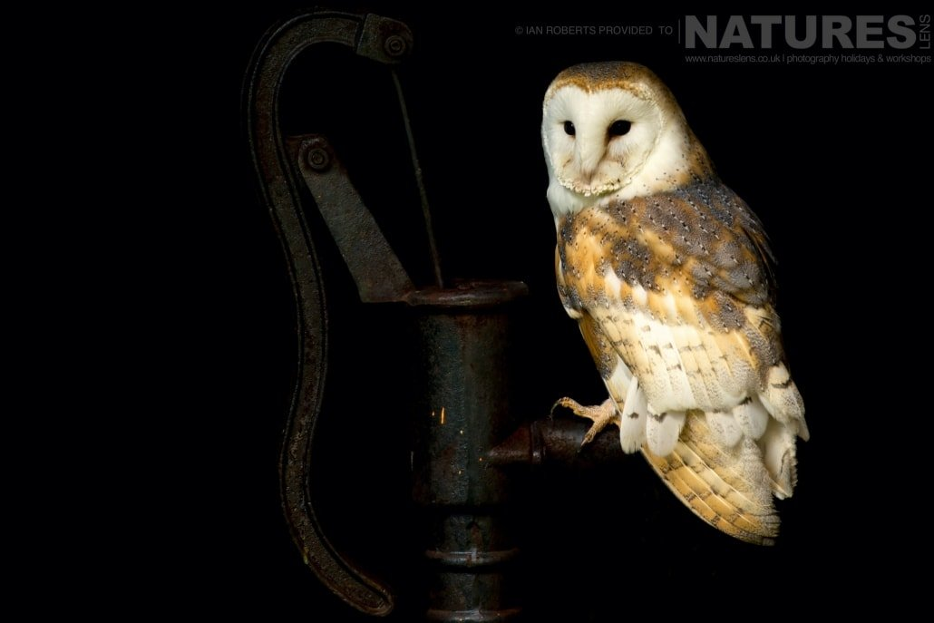 An image of the barn owl posed on a vintage water pump, captured by Ian Roberts, on the NaturesLens Autumn Birds of Prey Photography Workshop