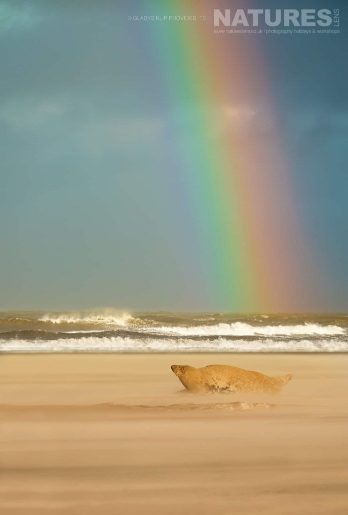 At the end of the rainbow, one of the seals caught in a storm image captured on a NaturesLens Seal Photography Workshop