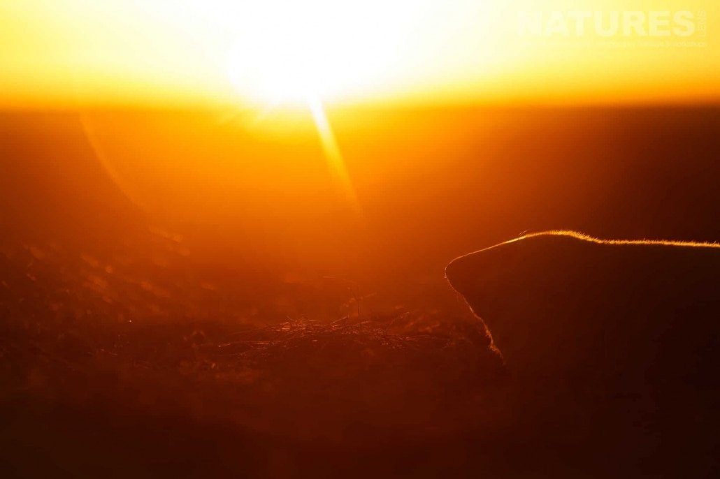 One of the seal pups at sunrise photographed on the Seals of Lincolnshire Photography Holiday run by NaturesLens