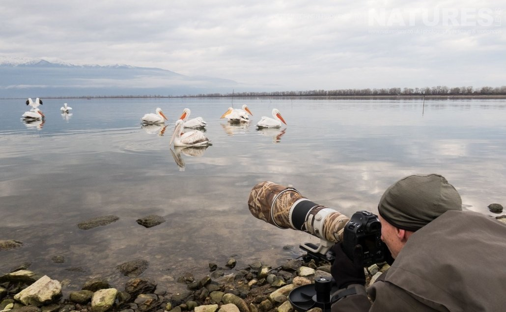 Steen in action, photographing the Dalmatian Pelicans drifting on the lake photographed during the NaturesLens Dalmatian Pelican Photography Holiday