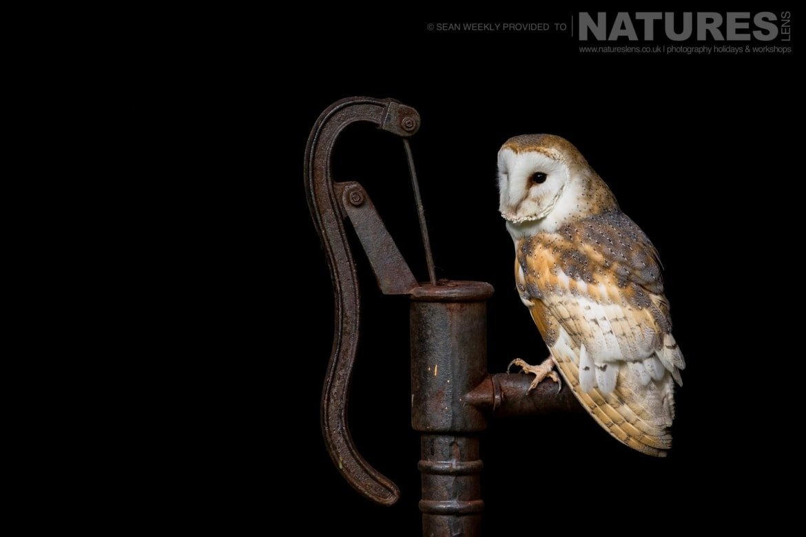 The barn owl perched on a vintage water pump photographed during a NaturesLens Birds of Prey Workshop in Mid Wales