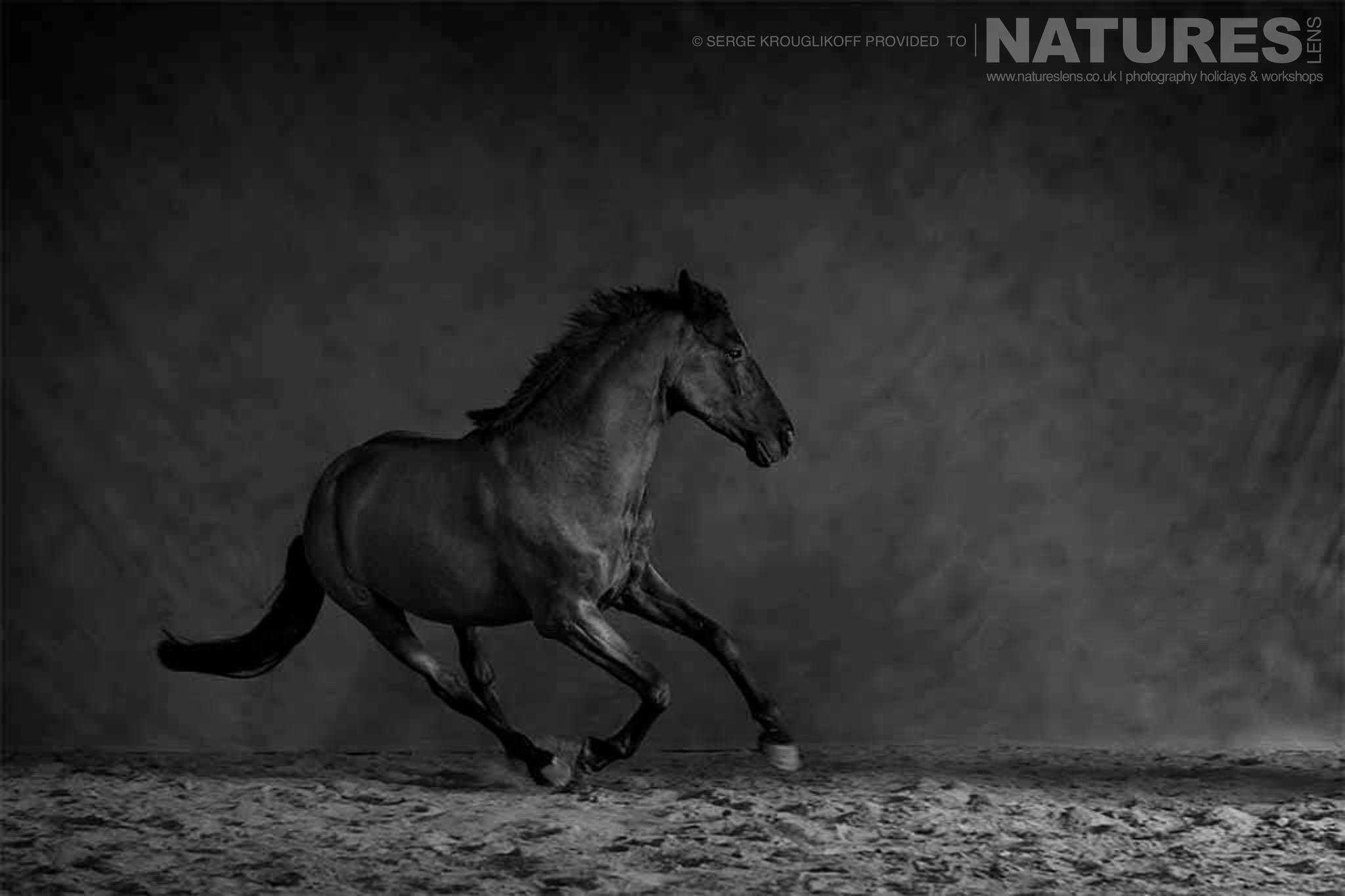 A black stallion canters in an arena during a special portrait session typical of the type of image that may be captured during the NaturesLens Wild White Horses of the Camargue Photography Holiday