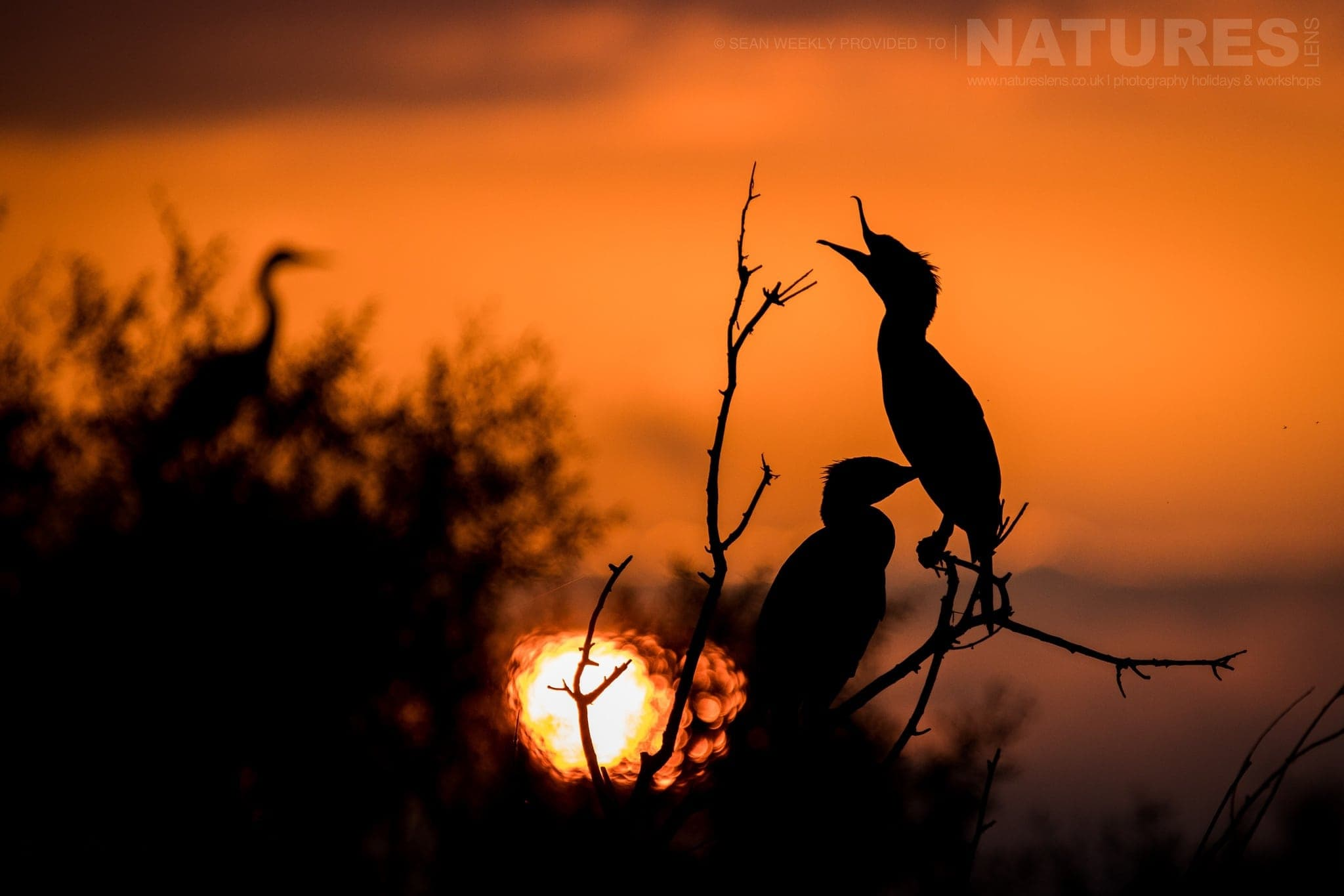 We Head Out Early To Lake Kerkini And Stay Out Late Capturing Bird Silhouettes   Photographed During The NaturesLens Spring Birds Of Lake Kerkini Photography Holiday