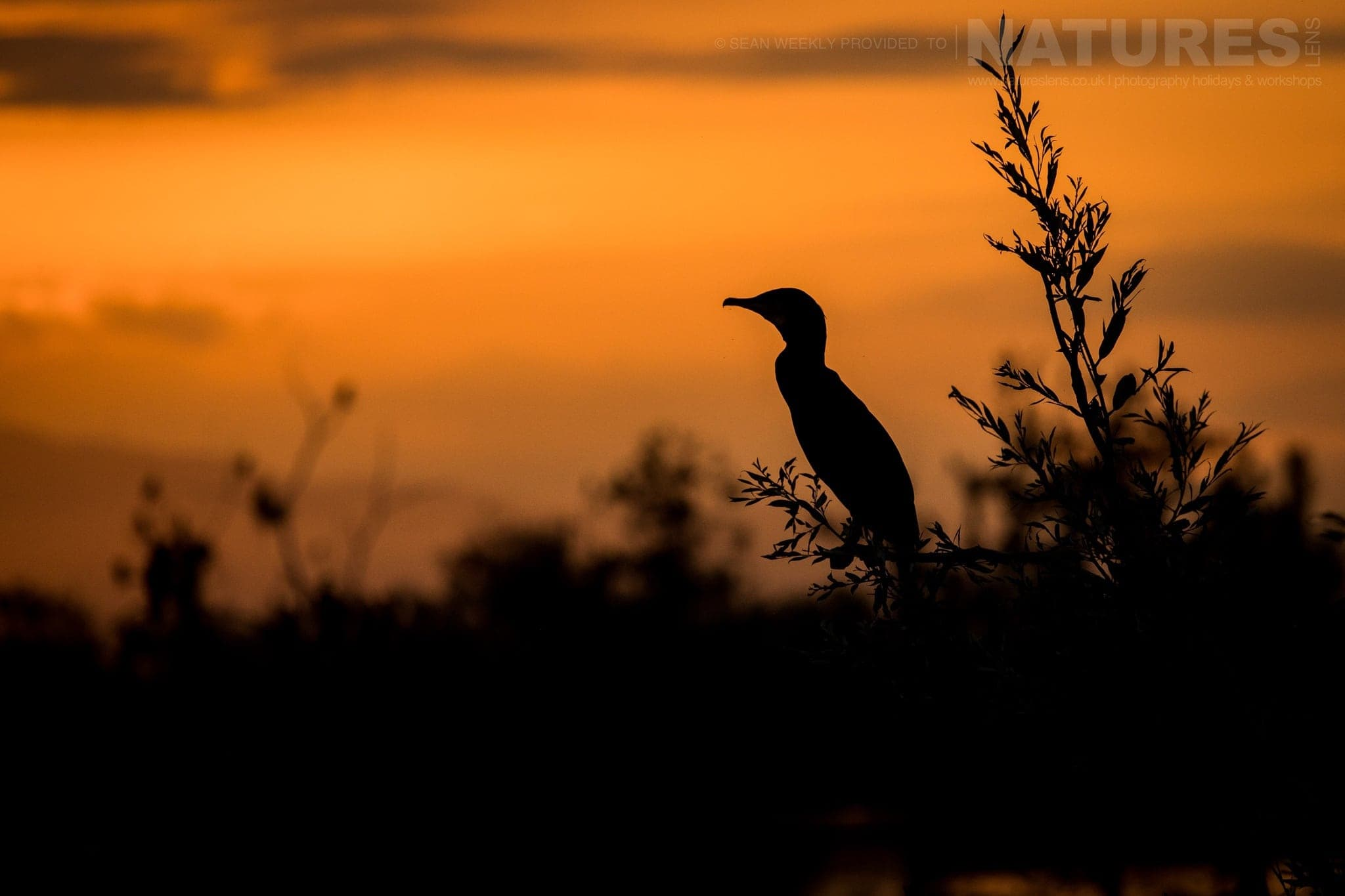 We Head Out Early To Lake Kerkini And Stay Out Late Capturing Silhouettes   Photographed During The NaturesLens Spring Birds Of Lake Kerkini Photography Holiday