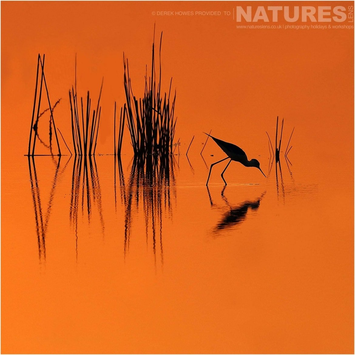 A mirror reflection of a wading bird at sunset in one of the lakes in the Kutch area an image captured during a Natureslens Little Rann of Kutch Photography Holiday