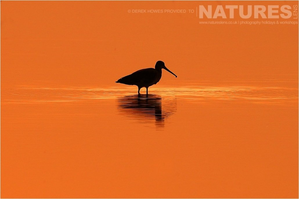 A sunset silhouette of a wading bird in one of the lakes in the Kutch area an image captured during a Natureslens Little Rann of Kutch Photography Holiday