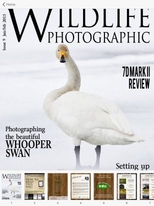 Wildlife Photographic Has Featured Cover Images A Number Of Times   Including This Whooper Swan From Hokkaido
