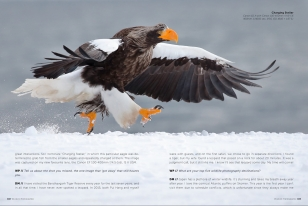 Wildlife Photographic Often Features Articles From NaturesLens, Such As The Asking Questions Of David