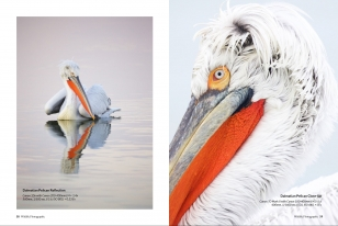 Wildlife Photographic Often Features Articles From NaturesLens, Such As The One Featuring Lake Kerkini's Dalmatian Pelicans