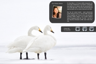 Wildlife Photographic Often Features Articles From NaturesLens, Such As The One On Japan's Whooper Swans