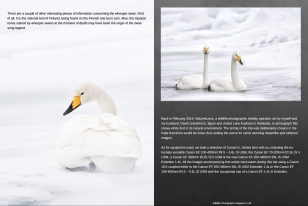 Wildlife Photographic Often Features Articles From NaturesLens, Such As The One On Kussharo's Whooper Swans
