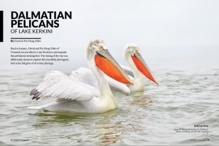 Wildlife Photographic Often Features Articles From NaturesLens, Such As The One On Lake Kerkini's Dalmatian Pelicans