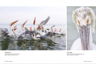 Wildlife Photographic Often Features Articles From NaturesLens, Such As The One On Lake Kerkini's Dalmatian Pelicans In Winter
