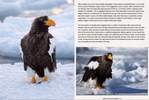 Wildlife Photographic Often Features Articles From NaturesLens, Such As The One On Stellars Sea Eagles On The Japanese Pack Ice
