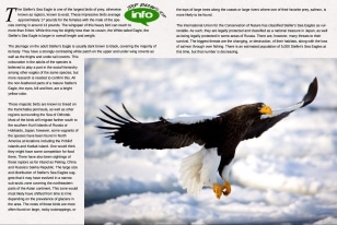 Wildlife Photographic Often Features Articles From NaturesLens, Such As The One On Stellars Sea Eagles On The Rausu Pack Ice